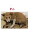 子犬ちゃんの家族募集してます。154番
