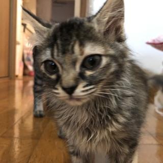 子猫 2匹 里親募集中!