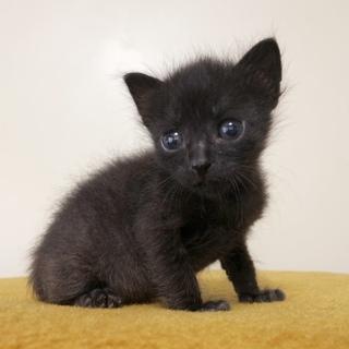 まんまるおめめの黒猫ヤマトくん!