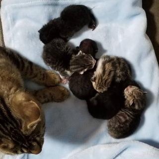 仔猫が産まれましたッ