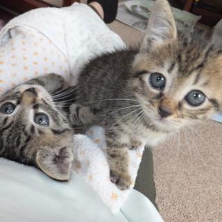 そっくりな 4匹の超可愛い子猫