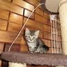 そっくりな 4匹の超可愛い子猫 サムネイル6