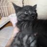 子猫を貰ってください サムネイル2