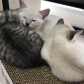 可愛い子猫の里親さん募集します☺️