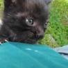 元気いっぱいの黒猫 男の子