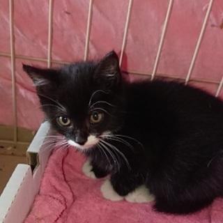とても愛くるしい1ヶ月の赤ちゃん猫!
