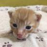 4月29日生まれの子猫ちゃんです