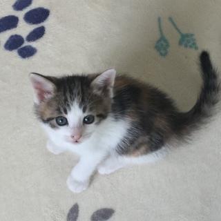 超絶美形三毛猫