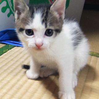 可愛い仔猫5匹生れました~=^_^=