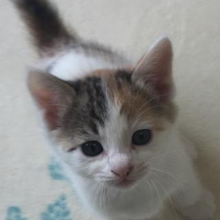 可愛らしい三毛子猫