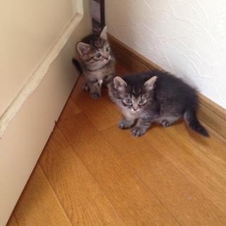 保護猫と赤ちゃん(牝子猫は一旦募集締め切ります)