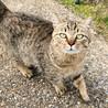 とても甘えん坊な猫さんの里親さん募集します