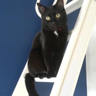魅力的な黒猫凛くん6歳♂