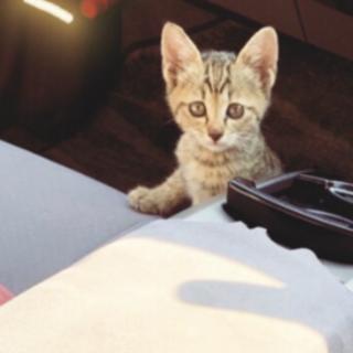 女の子の子猫