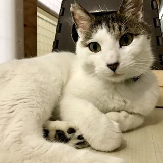 人懐っこいかわいい1才の猫ちゃん