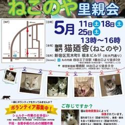 5月25日(土) 四谷猫廼舎 里親会(ボランティア募集中)