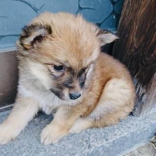 1ヶ月半・小柄な中型犬・メス