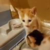 《里親さま決定しました》子猫の里親募集 サムネイル4