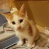 《里親さま決定しました》子猫の里親募集 サムネイル3