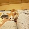 《里親さま決定しました》子猫の里親募集 サムネイル5