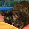 怯えた目をしたサビ猫住民による持ち込み サムネイル4