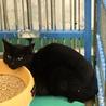 黒猫2匹②住民による持ち込み サムネイル3