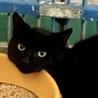 黒猫2匹②住民による持ち込み サムネイル4