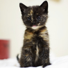 長毛っぽい猫が生んだサビちゃん
