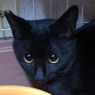 まんまるお目々の黒猫くん