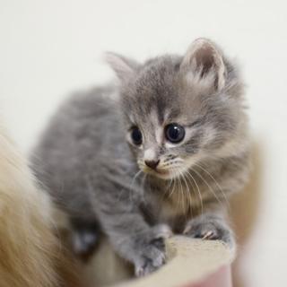 長毛っぽい猫が生んだグレーちゃん