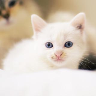 長毛っぽい猫が生んだシロちゃん