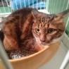 飼主持込(T_T)16歳のおばあちゃん猫