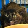 怯えた目をしたサビ猫住民による持ち込み サムネイル2