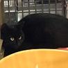 黒猫2匹①住民による持ち込み