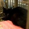 黒猫2匹①住民による持ち込み サムネイル2