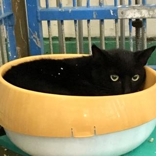 黒猫2匹②住民による持ち込み