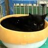 黒猫2匹②住民による持ち込み サムネイル2