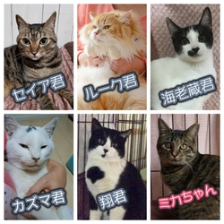 ねこ譲渡会(武田ミシン2階)