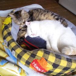 幸せな寝姿