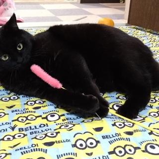 大きな黒猫 キリト 男の子 小熊みたいで可愛いです