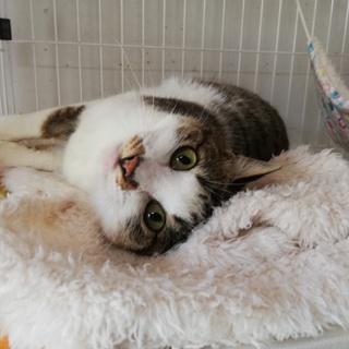 猫との生活が初めての方にもお勧めのゴロスリニャンコ