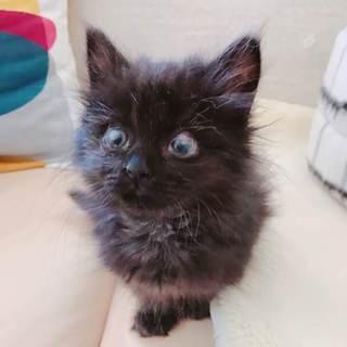 黒猫メアリーはちっちゃくてふわふわな女の子