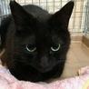 もふもふ黒猫ラムちゃん サムネイル2