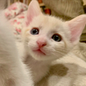 美しすぎるクリーム猫と天才ミケの兄弟