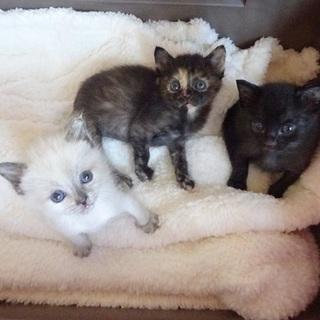 4月28日産まれの子猫達 動画あり