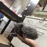 生後1ヶ月前後子猫