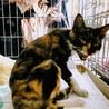 浦和のストーカー猫。ミケコ。