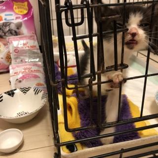 沖縄で子猫拾いました