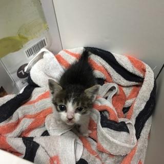 生後1ヶ月くらいの野良猫ちゃんです