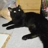 ゴミを漁っていた元飼い猫★今度こそ幸せに サムネイル2